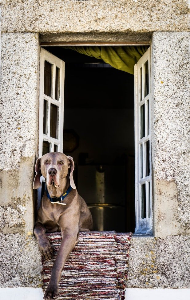 Great elevated dog houses review 2019